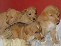 Guille y sus hermanos