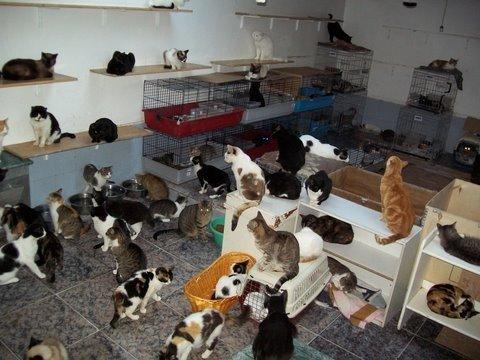 Proyecto Gato1