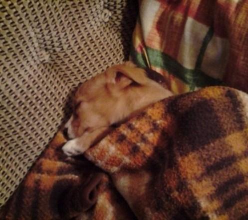 Mila durmiendo