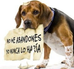 Perros - Lugares De Adopcion